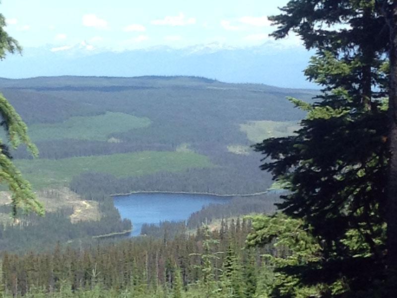 Canadian biodiversity strategy defines biodiversity